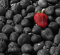 Необычная клубника черного цвета