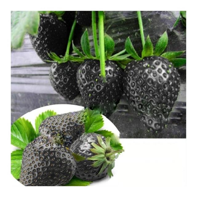 Сорт черной клубники