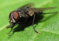 Это работает: 5 эффективных средств для борьбы с мухами в доме
