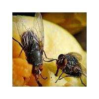 Лучшее средство от мух,фото