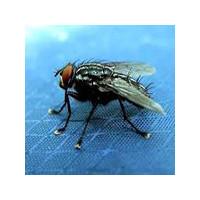 Эффективное средство от мух, фото