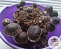 Блоки для выращивания Шиитаке, до 5-ти волн., фото 2