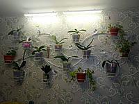 "Подставка для цветов на 15 чаш ""Ветка-3"""