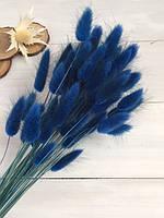 Лагурус синий сухоцвет  50 шт
