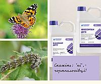 На території України  спостерігається масовий літ метеликів Чортополохівки (Репейници - Vanessa cardui)