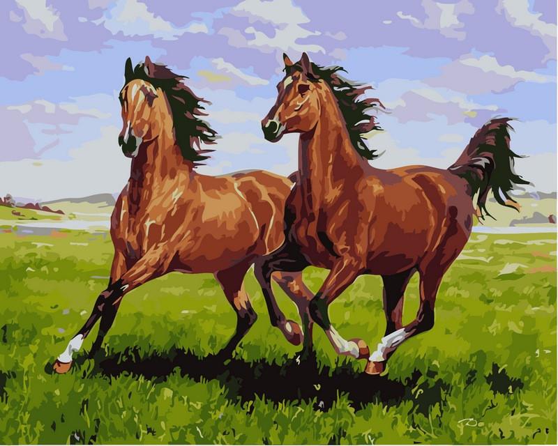 Картины по номерам 40×50 см. Тандем