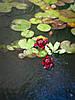 Наши растения