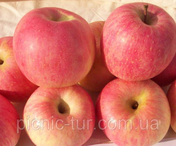 Зимние сорта яблук