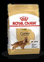 Royal Canin (Роял Канин) Cocker корм для собак породы кокер спаниель, 3 кг