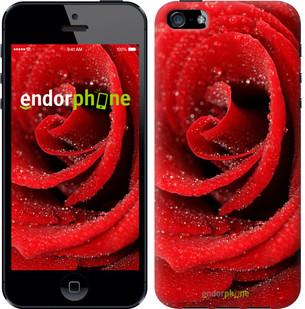 "Чехол на iPhone 5s Красная роза ""529c-21-571"""