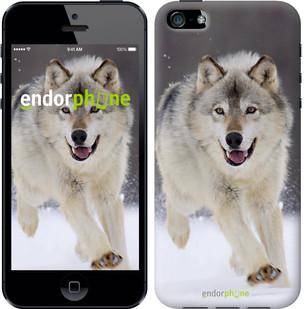 "Чехол на iPhone 5s Бегущий волк ""826c-21-571"""