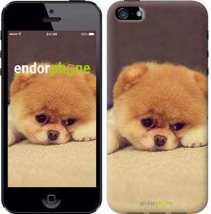 """Чехол на iPhone 5s Boo 2 """"890c-21-571"""""""