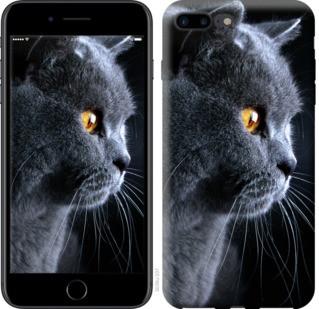 """Чехол на iPhone 7 Plus Красивый кот """"3038c-337-19380"""""""