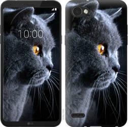 """Чехол на LG Q6 Красивый кот """"3038c-1094-19380"""""""
