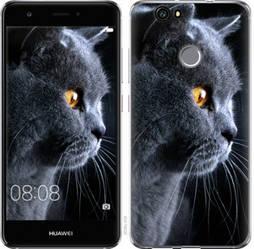 "Чехол на Huawei Nova Красивый кот ""3038c-439-19380"""