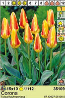 Цибулини тюльпанів «Corona»