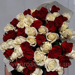 Роза Эквадор 51шт Красно-белая (90см)
