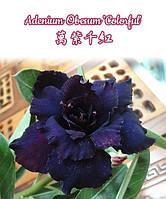 "Саженцы адениума Adenium Obesum 'Colorful'   размер 5"" без цветов"