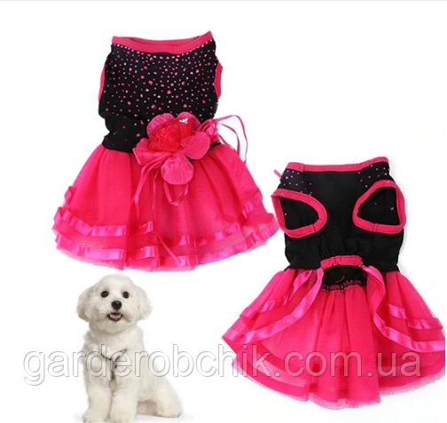 """Платье для собаки """"Рандеву"""". Одежда для собак, кошек"""