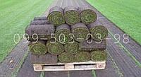 Рулонный газон, трава в рулонах от 30м2. Доставка по всей Украине попутным транспортом.