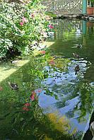 Биопрепарат ПОНД-ПЛЮС для удаления осадка в  прудах и водоемах.