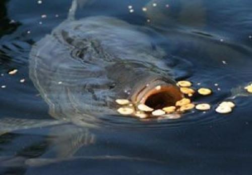 Приманка и прикормка технопланктон в Украине