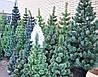 Искусственная сосна 180см (1.8м) город Полтава (зеленая,микс,распушенка).Купить искусственную сосну в Полтаве