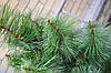 Искусственная сосна 200 см (2м) город Полтава (зеленая,микс,распушенка).Купить искусственную сосну в Полтаве