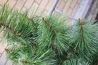 Искусственная сосна 200 см (2м) город Полтава (зеленая,микс,распушенка).Купить искусственную сосну в Полтаве, фото 1