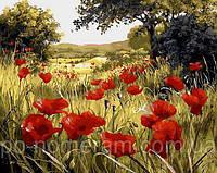 Картина раскраска Маковая поляна (QS1432) 50 х 65 см Babylon