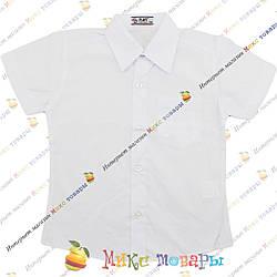 Белые рубашки с коротким рукавом Рост: 140- 176 см (3450)