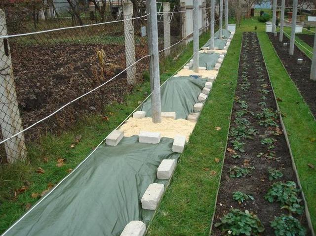 Метод половинного укрытия растения
