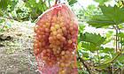 Защитные мешочки для гроздей винограда 31х50 (до 10 кг)  50 шт, фото 3
