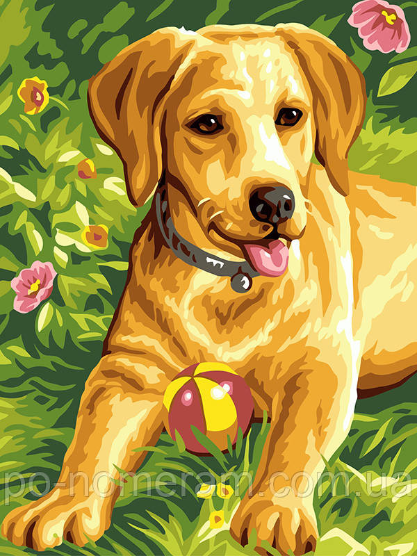 Раскраска для взрослых Золотистый щенок (BK-EX6051) 30 х ...