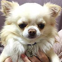 Адресник с гравировкой по фото кулон для собак жетон для низких пород