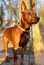 Адресник с гравировкой по фото кулон для собак жетон для низких пород, фото 3