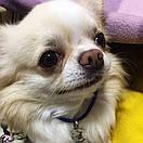 Адресник с гравировкой по фото кулон для собак жетон для низких пород, фото 2