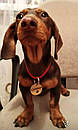 Адресник с гравировкой по фото кулон для собак жетон для крупных пород, фото 8