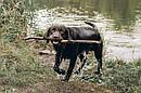Адресник с гравировкой по фото кулон для собак жетон для крупных пород, фото 9