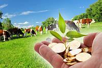 Отдельную группу по налогообложению намерены сформировать для фермеров