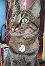 Адресник с гравировкой по фото кулон для кошек жетон Сердце, фото 3