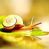 Гиалуроновая кислота с вытяжкой улитки Images Snail, 15 мл, фото 6
