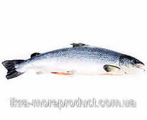 Рыба сёмга с.м 5/7 кг