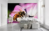Флизелиновые Фотообои Пчела от производителя за 1 день. Любая картинка и размер. ЭКО-обои