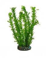 Аквариумное растение Aquatic Plants №192, 19 см.