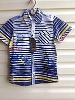 Рубашка для мальчиков128,140,152,164 роста с коротким рукавом Полоска