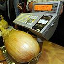 ЛУК ГИГАНТ (giant onion AILSA CRAIG)
