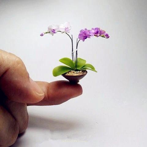 Міні-орхідея для дому та саду! Фаленопсис в горщику! Упаковка 20 шт