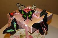 Живые бабочки!
