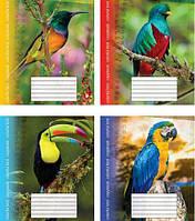 47f2ee49c37e6 Тетрадь Мечты сбываются Экзотические птицы А5, 18 листов, клетка, ассорти  (ТА5.